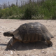 Turtle - VideoHive Item for Sale