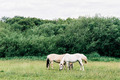 Symmetrical horses - PhotoDune Item for Sale