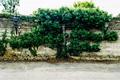 Tree of Life - PhotoDune Item for Sale