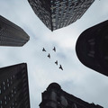 Looking up Modern Buildings with Flying Birds - PhotoDune Item for Sale
