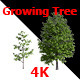 Growing Of Tree - VideoHive Item for Sale