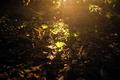 Sunlight on the forest floor - PhotoDune Item for Sale