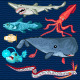 Fish Of The Deep Blue Sea Collection Set - GraphicRiver Item for Sale