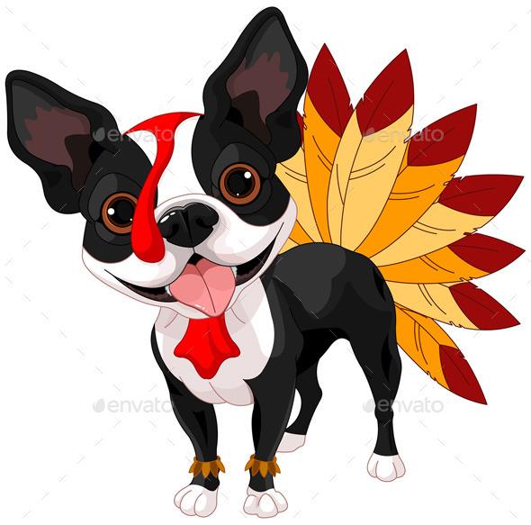 Thanksgiving Boston Terrier