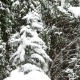 Beautiful Snowfall In The Tropics - VideoHive Item for Sale