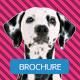 Pet Shop Trifold Brichure - GraphicRiver Item for Sale