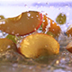Fruits Falling - VideoHive Item for Sale