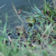 Frogs Camouflage - VideoHive Item for Sale