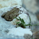 Leopard Frog Camouflaged on Rock - VideoHive Item for Sale