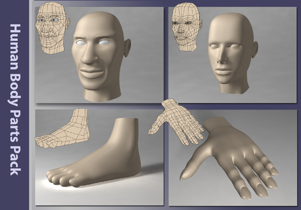 3D Body Part Models from 3DOcean