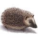 Hedgehog - GraphicRiver Item for Sale