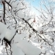 Winter Forest Scenery - VideoHive Item for Sale