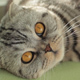 Curious Cat - VideoHive Item for Sale