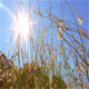Grass And Sun - VideoHive Item for Sale