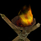 Low Poly Pan Fire - 3DOcean Item for Sale