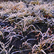 Grass Covered with Frost 2 - VideoHive Item for Sale