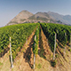 The Vineyard from The Air - VideoHive Item for Sale