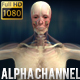 3D Human Body Anatomy Kit  4 Animations - Man - VideoHive Item for Sale