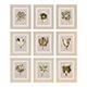 Charlotte Morgan Watercolour Tulips Sepia Nine Piece - 3DOcean Item for Sale