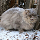 Cat During A Snowfall - VideoHive Item for Sale