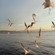 Ferry and Birds - VideoHive Item for Sale