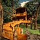 Tree House + Scene - 3DOcean Item for Sale
