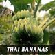 Thai Bananas - VideoHive Item for Sale