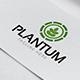 Plantum Logo - GraphicRiver Item for Sale