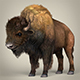 Low Poly Realistic Montana Buffalo - 3DOcean Item for Sale