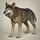Low Poly Realistic Wolf - 3DOcean Item for Sale
