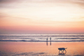 Sunset on the beach - PhotoDune Item for Sale