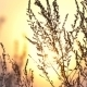 The Sunset, The Sun Lights Beautifully Dried Herbs - VideoHive Item for Sale