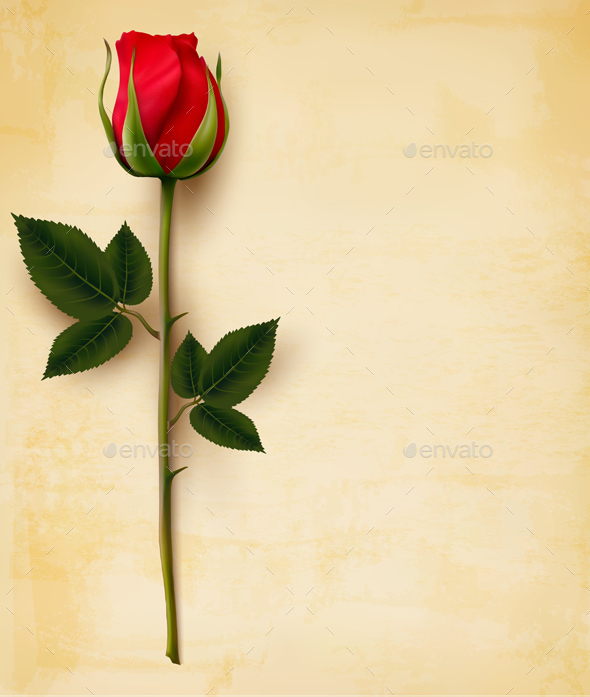 Happy Valentines Day Background Single Red Rose Vector