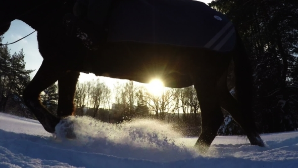 Silhouette Of Horses In Snow