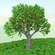 Tree Grow Opener II - VideoHive Item for Sale