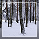 Winter Forest - VideoHive Item for Sale