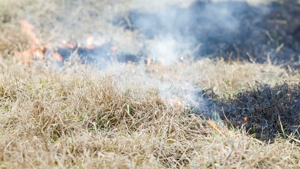 Grass Burning In The Field