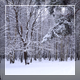 Winter Forest 4 - VideoHive Item for Sale