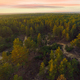 Pines Sunset - VideoHive Item for Sale