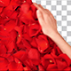 Rose Petals - VideoHive Item for Sale
