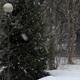 Backyard Snow - VideoHive Item for Sale
