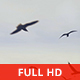 Seagulls and Clouds - VideoHive Item for Sale