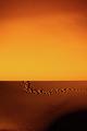 Desert Death Valley - PhotoDune Item for Sale