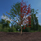 high poly tree - 3DOcean Item for Sale
