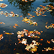 Tree and Clouds is Reflected in the Autumn Lake - VideoHive Item for Sale