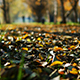 Leaves on the Track in the Autumn Park - VideoHive Item for Sale