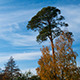Clouds Fly over Autumn Trees in the Park - VideoHive Item for Sale