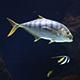Aquarium Fish 01 - VideoHive Item for Sale