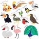 Set of Cartoon Birds Isolated on White - GraphicRiver Item for Sale