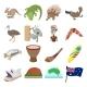 Australia Icons Cartoon - GraphicRiver Item for Sale